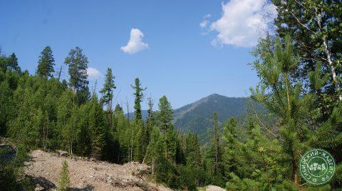 Горы и нетронутая тайга окружают Орасугское месторождение